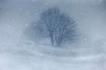 Trees on meadow in blizzard in winter 版權商用圖片