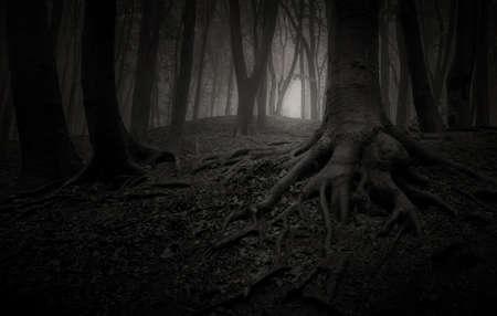 Donker eng bos bossen in de nacht op Halloween