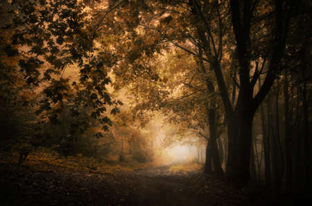 Path in dark forest with fog in autumn Stock Photo