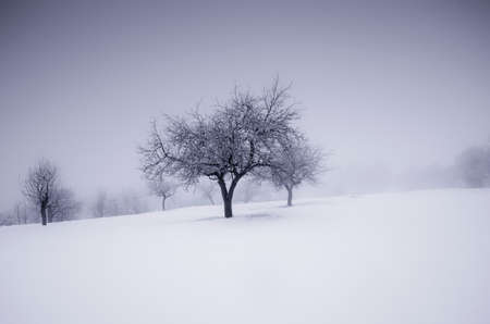 winter wonderland: Albero su prato in winter wonderland