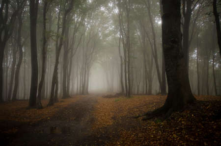Road in a mysterious enchanted magical forest with fog Stock Photo