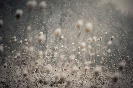 Snow falling over landscape with frozen plants in winter Stock Photo