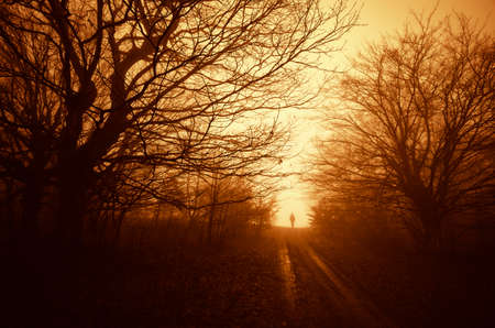 Man on road path in dark forest with fog at sunset