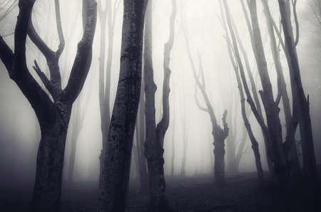 Haunted bos Stockfoto