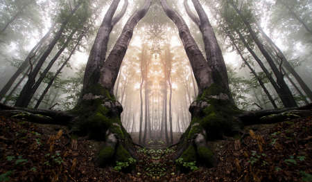 dark forest: Surreal mysterious dark forest with fog on Halloween Stock Photo