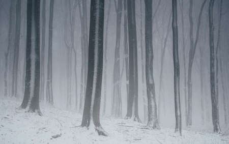 winter wonderland: Nebbia nella foresta delle meraviglie invernale con nebbia