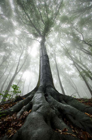 Vertical photo of giant tree in mysterious fantasy forest with fog