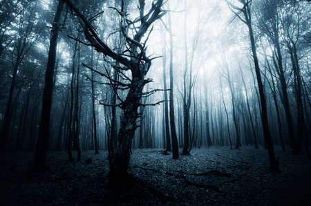 Deep dark woods with mist Stock Photo