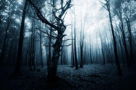 Głęboki ciemny las z mgły