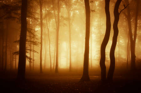 Mysterious forest with fog at sunset