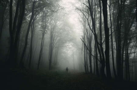 Silhouette in dark mysterious forest with fog Stock Photo