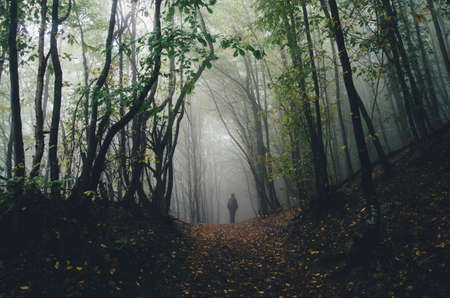 Man walking trough a fantasy forest with mysterious fog