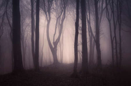 spooky: Dark Halloween forest with tree in shadows Stock Photo