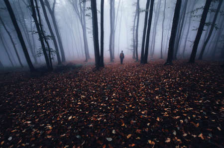 scary forest: Silhouette of man in dark haunted scary forest with fog in late autumn Stock Photo