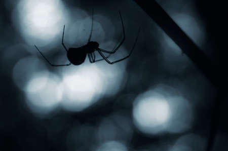 spider web: creepy spider silhouette at night Stock Photo