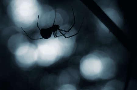 creepy spider silhouette at night Foto de archivo