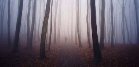 Ghost in dark mysterious haunted forest with fog Imagens