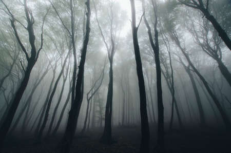 dark forest: Dark forest with fog after rain Stock Photo