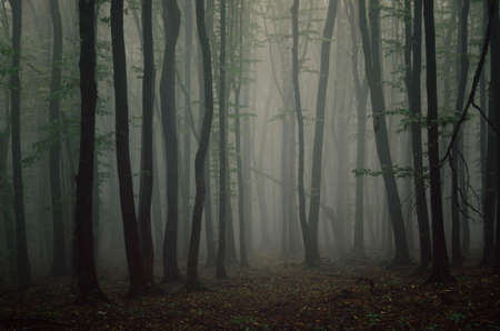 dark forest: Dark forest with thick fog Stock Photo