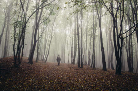 magical forest: Man walking in magical fantasy forest with fog
