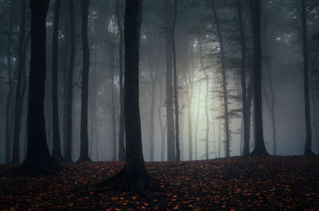 magical forest: Light in enchanted magical  fantasy  forest with fog Stock Photo