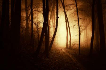 Road in het donker achtervolgd bos met mysterieuze mist op Halloween Stockfoto