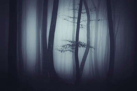 mystery woods: Dark scary woods with mysterious fog on Halloween night Stock Photo