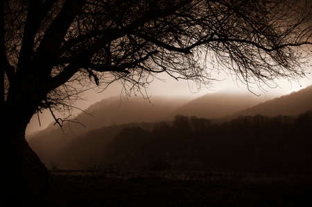 foggy hill: Fantasy landscape with fog rolling over hills and dark tree in the morning