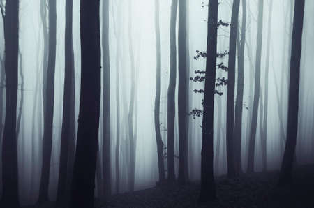 Haunted forest with mysterious fog on Halloween evening