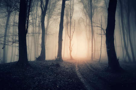 Road in scary mysterious forest with fog on Halloween