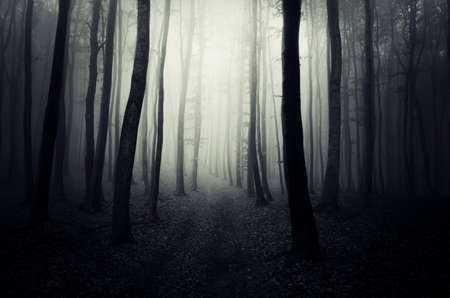 mystery woods: Road in dark mysterious fantasy forest with fog in late autumn Stock Photo