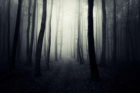 Weg in donkere mysterieuze fantasie bos met mist in de late herfst Stockfoto