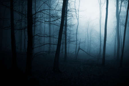 Night in a haunted forest with fog on Halloween
