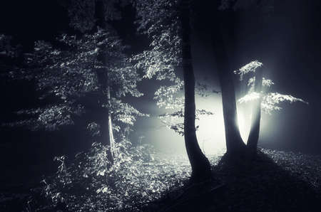 fog forest: Strange light at night in haunted dark forest with fog on Halloween