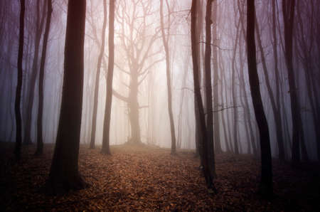 Autumn in a mysterious forest with fog