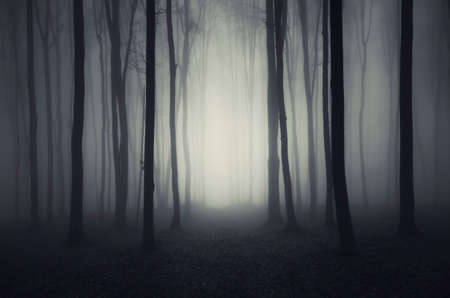Path trough haunted dark forest with thick fog on Halloween