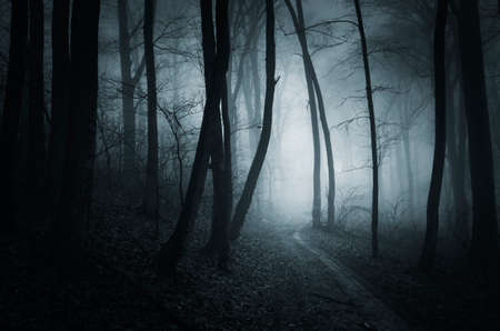 Path trough a dark haunted forest with fog on Halloween 免版税图像