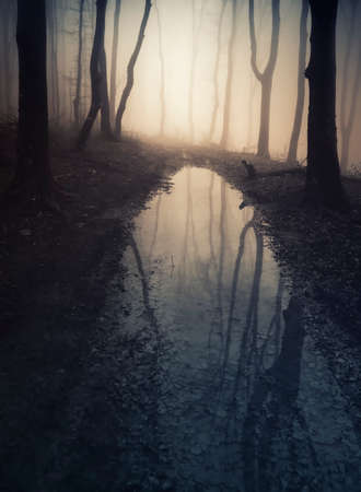 Lake in a mysterious dark haunted forest with fog