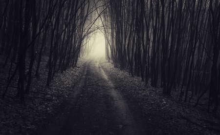 planta con raiz: Camino en el bosque embrujado oscuro con niebla en Halloween