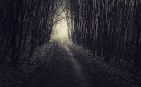 Road in dark haunted forest with fog on Halloween