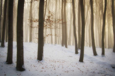 christmas morning: Magic winter forest with fog and snow on Christmas morning