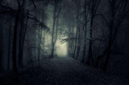 Pad door een donkere geheimzinnig bos met mist bij nacht