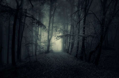 mystery woods: Path trough a dark mysterious forest with fog at night