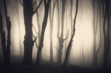 scary halloween: Scary haunted Halloween forest with fog