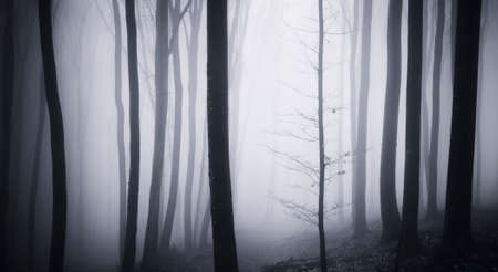 fog: Abstract mysterious Halloween forest with fog
