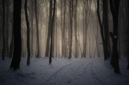 winter trees: Winter road trough frozen forest at sunset
