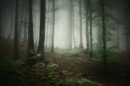 Misty forest in Transylvania Stock Photo