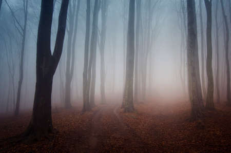 Mysterious misty forest with fog in autumn on halloween