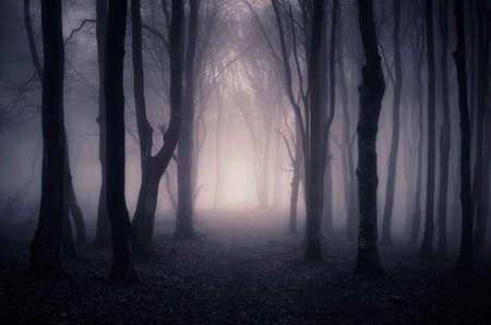 Pad door een donkere mysterieuze bos met mist op Halloween