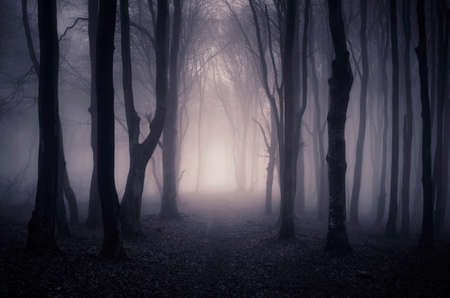 mystery woods: Path trough a dark mysterious forest with fog on Halloween